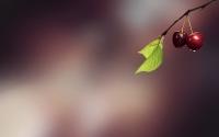 картинки две вишенки на дереве