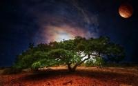картинки гигантское дерево