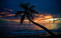 картинки одинокая пальма на закате