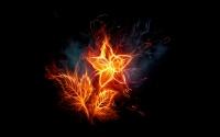 картинки огненный цветок