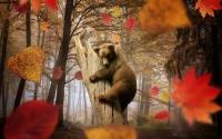 картинки медвежонок и сова