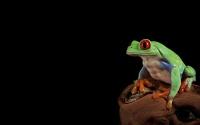 картинки зеленая лягушка