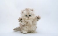 картинки котенок на задних лапках