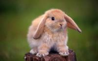 картинки кролик на пеньке