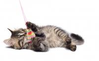 картинки играющий котенок
