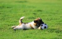 картинки щенок с мячиком