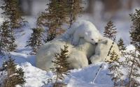 Картинки Медвежонок будит маму на нетбук