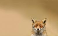 картинки хитрый лис