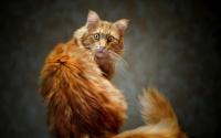 картинки поражённый кот