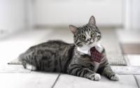 картинки коток на галстуке