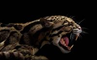 картинки оскал хищника