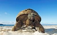 Обои Большая черепаха хорошего качества