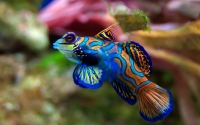 картинки красивая рыба