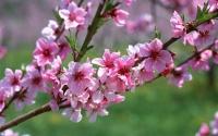 картинки весенний сад