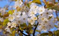 картинки цветущие деревья