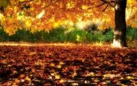 картинки сверкающее золото осени