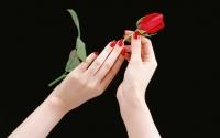 картинки роза в женских руках