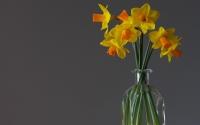 картинки нарциссы в вазе