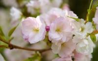 картинки нежные весенние цветы
