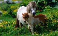 картинки лошадь и жеребенок