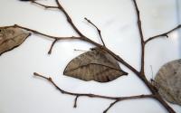 картинки бабочка каллима