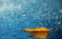 картинки осенний дождь