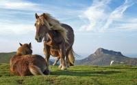 картинки лошадь игреневой масти
