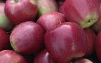 картинки яблоки глостер