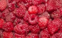 картинки ягода малина