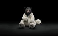 Медведь в костюме
