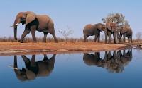 Слоны на берегу реки