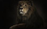 картинки серьезный лев
