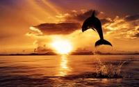 картинки прыжок дельфина