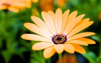 HD фото Весенний цветок для рабочего стола