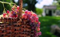 HD обои Корзинка с виноградом скачать