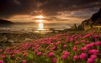 картинки цветы на закате