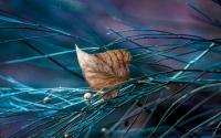 картинки сухой лист