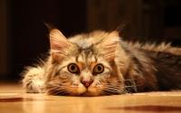 Рисунок кошки из фильма место встречи изменить нельзя