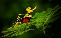 картинки красивая бабочка