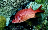 картинки красная рыба в одиночестве
