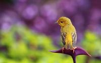 Заставки Маленькая птичка на аватарку