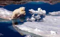 картинки храбрый белый медведь