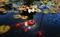 картинки озеро с рыбой