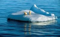 картинки два полярных медведя