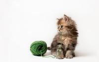 картинки маленький котенок с клубком