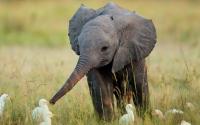 Фото Маленький слон для рабочего стола