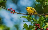 картинки желтая птичка на ветке