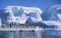 картинки большая семья пингвинов