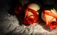 картинки розы и бриллианты